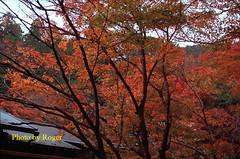 30 拷貝 (EH500) Tags: 日本 大原 寂光院 japan 京都 楓葉 angenieux film rvp100 nikon fm2 桜 櫻花 底片 膠卷 135 cherry blossom nikoncoolscan nikoncoolscanls9000ed coolscan9000ed ならこうえん 愛展能 安琴 銀鹽 slr fuji 富士 rvp color fujichrome velvia fujichromevelvia slide 正片