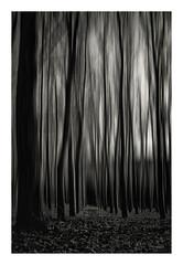 El lugar donde habitan los sueños - Where dreams live (bit ramone) Tags: blancoynegro blackandwhite monochrome bitramone lazonaoscura thedarkside