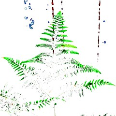 HAPPY HOLIDAYS (vertblu) Tags: happyholidays seasonsgreetings fern ferns white green blue brown processed vertblu bsquare