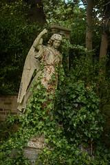 Statue (mellting) Tags: england greatbritain highgatecemetery london nikond500 bloggad flickr instagram matsellting mellting nikkor5018 nikon statue staty headstone grave ivy