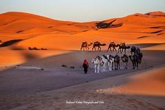 Berbers' nomad life in Sahara at Morzouga, Morocco (indranilkishor) Tags: 31°5′57″n4°0′42″w africa algerianborder beautifulmorocco berber bestimagesofmorocco camel camelride camelsafari cameltrek dry drâatafilalet errachidia exotic foothillsoftheatlasmountains heavneonearth indranilkishor indranilkishorfotografieandfilm landscapes lonelyplanet merzouga moroccandesert morocco moroccotourism muslim nature nomadiklife northafrica saharadesertmorocco sand sanddunes shipofdesert southeasternmorocco subsaharanafrica sunny thegreatdesert tourism touristicplace مرزوقه