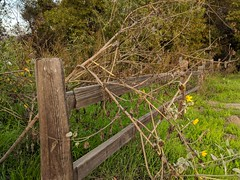 Wooden Fence (Kelson) Tags: madronamarsh marsh nature hike torrance california trees southbay plants