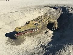 Dinner? (more Mark Hewins) Tags: torredelmar axarquia andalusia spain crocodile sand art sea surf