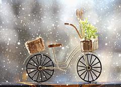 I want to ride my bike (Through Serena's Lens) Tags: 2dwf bicycles bike winter snow dof bokeh closeup stilllife canoneos6dmarkii