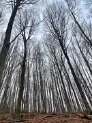 (Bárbara L.F.) Tags: árboles elmontseny santmarçal arbres bosc bosque trees forest