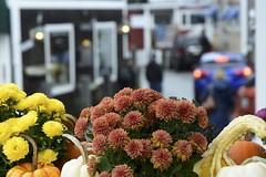 perkins cove (mainesandy) Tags: maine ocean ogunquit perkinscove flowers rain color flower vegetables squash pumpkins autumnvegetables