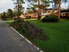 P9200904 (photos-by-sherm) Tags: hurricane florence recovery wilmington nc debris pine trees cuttings chain sawing yards valley fall