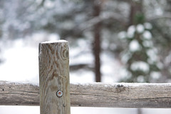 HFF~ January 2019 (Karen McQuilkin) Tags: hff fence snow pines winter