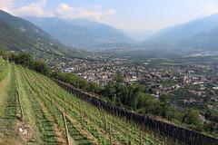 Blick auf die Gemeinde Lana (uwelino) Tags: südtirol italien lana altoadige trentina naraun sthippolyt völlan europa europe südeuropa wein weinreben 2018 sommer tisens