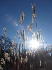 IMG_5622 (dianangelah) Tags: winter eis frost hiver reif kristall christals blatt blätter leaves feuilles natur nature himmel sky ciel cielo raureif hoarfrost givre geada