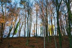 Autumn Light (Bephep2010) Tags: 2018 7markiii alpha au auzh bäume herbst herbstlicht hügel ilce7m3 sel1635z schweiz sony switzerland wald zurich zürich autumn autumnlight fall forest hill ⍺7iii kantonzürich ch