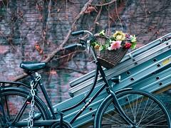 flowerpower (claudia 222) Tags: bicycle amsterdam blue flowers gf110mmf2rlmwr wall gfx50r fuji