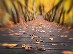 Lensbaby (alowlandr) Tags: elswout overveen netherlands lensbaby sol22 autumn fall bridge leaves lowangle nopeople m43 mft