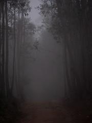RickoLodgeMadagsacar (FLEC Photography) Tags: madagascar rikolodge nationalpark andisibe fog mist jungle