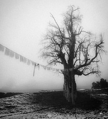 The Ancient One (Drouyn) Tags: blackandwhite canon g10 nepal mist tree old flags annapurna ancient tibet prayer trekking