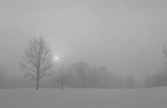 (cara zimmerman) Tags: film 35mmfilm pentaxk1000 pleasantrungolfcourse snow winter morning blackandwhite bnw fog trees sun indianapolis expiredfilm