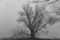 Mist 16-12-18 (k.stoof) Tags: mist boom tree natuur nature landscape landschap amsterdam