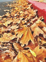 """""""Parking Violation"""" (bradhodges09) Tags: selectivefocus focusonforeground fallleaves autumnleaves fall autumn noparking redzone gutter dryleaves leaves"""
