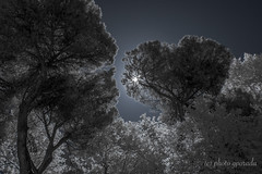 Trees in the Park Villa Borghese - City of Rome (gporada) Tags: villaborghese italy cityofrome infrared nikon nkond40 720nm