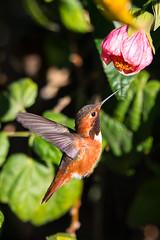 SC_Birds_12-26-18-4