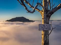 No witch today (Dan Österberg) Tags: witch løvstakken bergen sunrise clouds mist fog mountain landscape sign tree