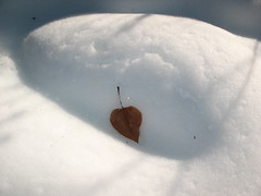 One Leaf (Pictoscribe) Tags: pictoscribe winter