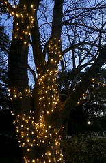 #Walking through #CentralPark #lastnight , #SanMateo #california (Σταύρος) Tags: sanmateopark publicpark park christmaslights goodevening dusk merrychristmas happyholidays treelights saturdayevening walking centralpark lastnight sanmateo california kalifornien californië kalifornia καλιφόρνια カリフォルニア州 캘리포니아 주 cali californie northerncalifornia カリフォルニア 加州 калифорния แคลิฟอร์เนีย norcal كاليفورنيا