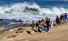 Wild seals and fanatical humans on Seal Rock in La Jolla, California (lhboudreau) Tags: animals animal seashore shore rocky rock waves wave water surf ocean sea outdoors outdoor people sealrock sealions sealion seals seal lajollacove waterfront california lajolla