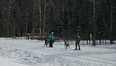Cross Country Skiing (Mr. Happy Face - Peace :)) Tags: htmt trees forest snow sun cloud sky trail skiing outdoors activity winter nature hiking art2019 dog puppy