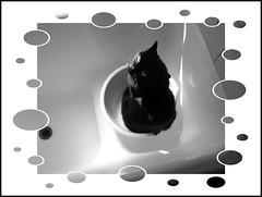 Voglio fare il bagnetto!!! (claudiobertolesi) Tags: isi gatto gattaiside bagnetto 2014 gattonero claudiobertolesi micio felino amimali animalidomestici cat cats eyes blackcat pets monocromo
