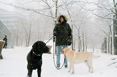 snowdogs (haikos) Tags: biogont235 zm people dogs zeiss film rangefinder leica leicam4 35mm winter montreal kodak kodakgold200 city street streetphotography