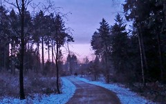 Way to School (farmspeedracer) Tags: sky morning januar january 2019 people kids mother forest sunset dawn blue purple cold winter path