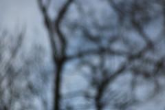 No Future (gripspix) Tags: 20190206 iscogöttingen stellagon 128100mm projectionlens projektionsobjektiv selfadapted selbstangepasst trees bäume kiefern pines decay waldsterben tod nadelverlust lossofneedles absterbend blur unscharf