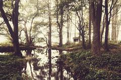 As Dreams Unfold (henriksundholm.com) Tags: nature landscape forest woods lake water reflections shadows trees grass hdr lummelunda gotland sverige sweden