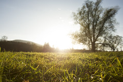 autumn sunset (LG_92) Tags: autumn sunset evening grass field meadow tree countryside trip green yellow sunshine light low 2018 nikon dslr d3100 hungary hungarian matra