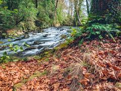 LA FUENTE DEL FRANCES, HOZNAYO (faustoreinosa) Tags: cantabria hoznayo rio fuentedelfrances efectoseda agua otoño arboles