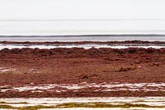 Staunings Ø (Frank Schmidt) Tags: solrødstrand kyst vand natur water eos7d outdoor denmark day danmark canon colorful colors november 2018 tang bølger brus sand brun