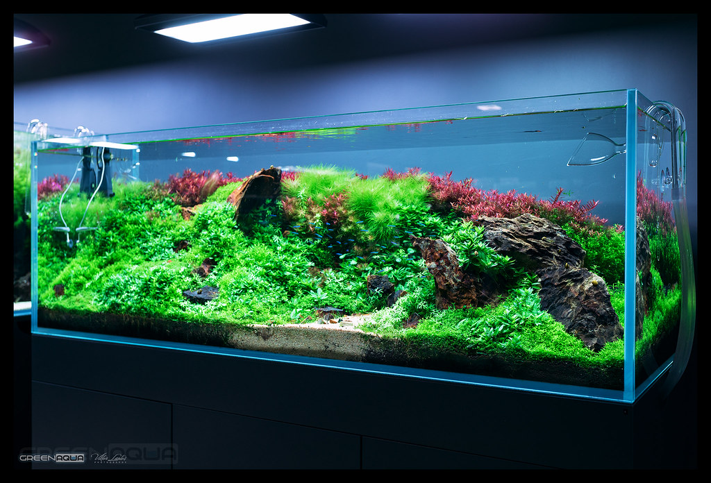 the world s most recently posted photos of aquascape and nature
