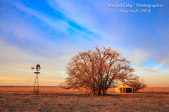Down on the Farm (Bridget Calip - Alluring Images) Tags: abandoned alluringimagescolorado autumn bridgetcalip colorado dustbowl easternplains fall lincolncounty allrightsreserved blueskies copyrighted desolate dramaticclouds homestead wood