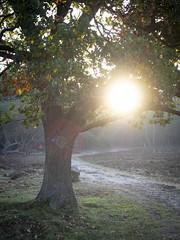 Bussumerheide 2018: Holding the sun (mdiepraam) Tags: bussumerheide 2018 bussum westerheide heath earlymorning dawn sunrise tree branch backlight