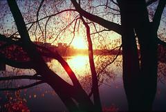 Autumn sunset (dynax60) Tags: minolta dynax60 trees sunset autumn colors dimage5400 fujifilm fuji velvia velvia100 135film film filmnotdead