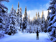 skiing in a fairytale forest (le cabri) Tags: winter outdoor landscape snow ice trees frozen freeze forest fairytale scenics ski skiing sky day polarclimate blue coniferoustree evergreentree freshness january nature tranquilscene