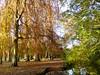 Autumn colours, Bute Park, Cardiff