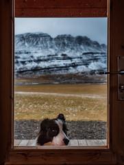 Dog (Thomas Huston) Tags: iceland mountains dog animal morning window door snow