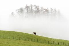 Fog 2 (Joe Hayhurst) Tags: cumbria england hill hills joehayhurst lakedistrct lakedistrict landscape mountain mountains nikon horse fog mist