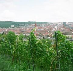 Grape vineyard (Saori_) Tags: film autocord germany wurzburg grapes vineyard ドイツ オートコード フィルム 葡萄畑 ヴィルツブルグ