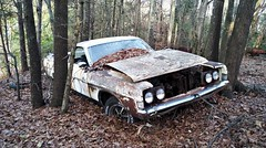 All that is hidden is no longer (Dave* Seven One) Tags: fomoco ford ranchero pickup pickuptruck abandoned forgotten overgrown rust rusty rot rotted rotting decay decaying trees leaves dirt grime filth 1960s