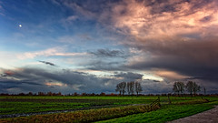 The Clouds And The Moon (Alfred Grupstra) Tags: nature cloudsky sunset ruralscene agriculture sky landscape farm outdoors cloudscape tree scenics field meadow blue weather summer beautyinnature dusk season