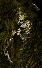 Treescape (Padmacara) Tags: australia fremantle nature d7100 tamron28300 shadowlight tree bark explored