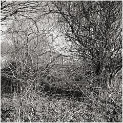 im korkus 274 (beauty of all things) Tags: eschweiler wald forest imkorkus trees treesinthesky bäume quadratisch bw sw gestrypp gestrüpp scrub tangle wirrwarr entropy